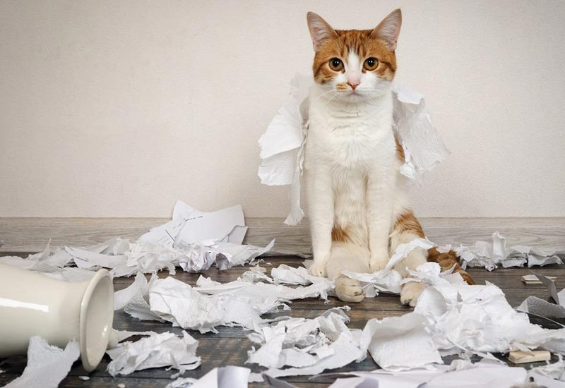 cat surrounded by ripped up paper