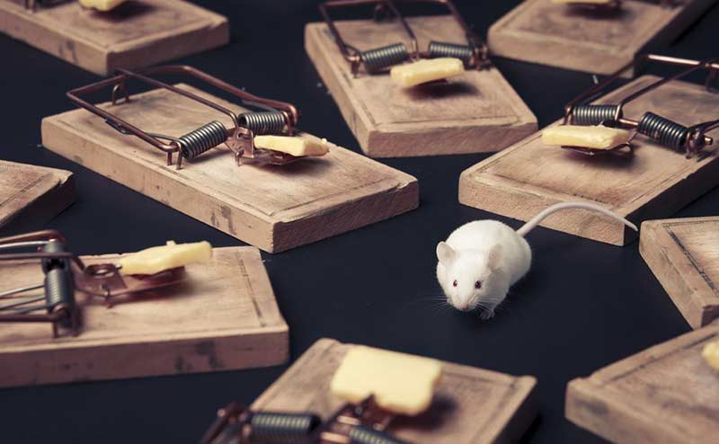 mouse surrounded by lots of mouse traps